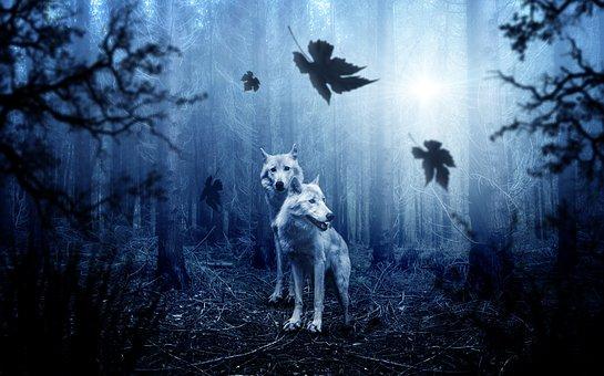wolf-2864647__340
